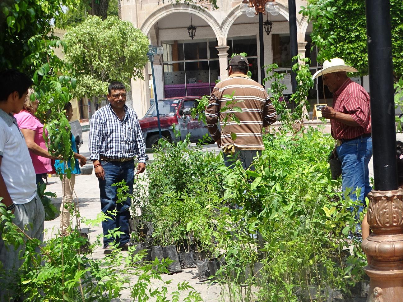 Producir n cerca de 6 mil nuevos rboles en vivero for Vivero municipal